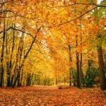 Beautiful fall forest scene with vibrant foliage