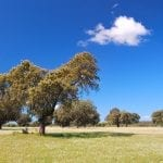 Meadow in Extremadura, Spain