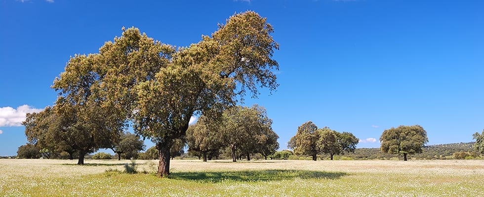 andalusia-extremadura-meadow