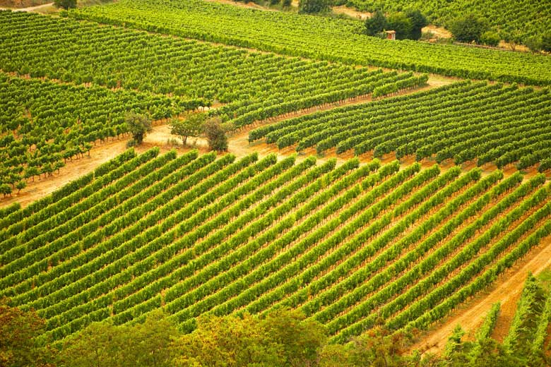 europe_tours-small_group_tours-languedoc