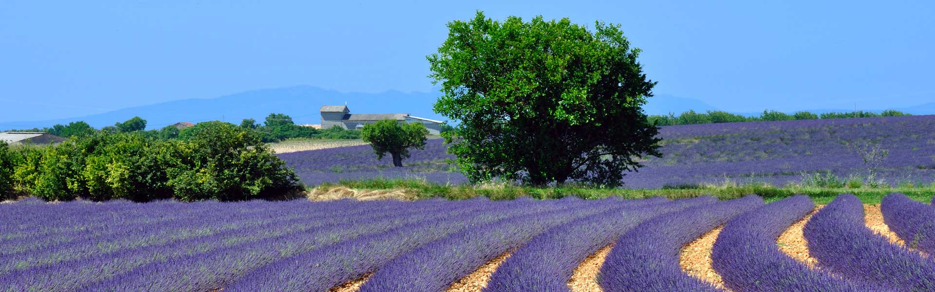 small-group-tours_burgundy-provence-tour