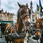 Horse-drawn carriages in the Grote Markt, Bruges