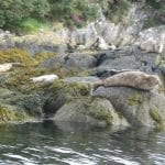 lazy-seals-on-the-bay-of-bantry-ireland