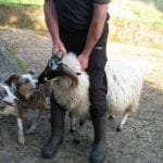 this-farmer-was-so-nice-he-let-us-come-close-and-hug-the-sheep