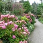 gardens-of-ilnaculin-island-bantry-bay-ireland