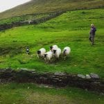 kells-ireland-shepharding-demo